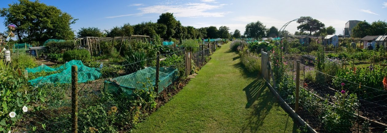 THE HAWKINGE ALLOTMENT SOCIETY